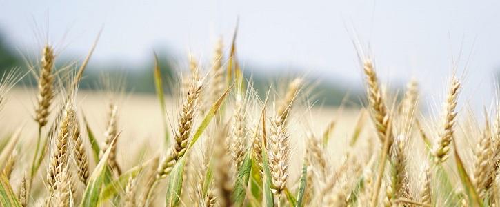 Enginyeria agroalimentària