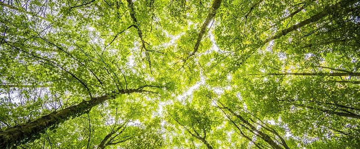 Desenvolupament humà i sostenible